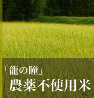 農薬不使用米